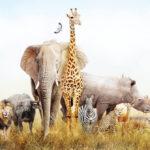 動物の四字熟語!動物の漢字が入る四字熟語をたくさん集めました!